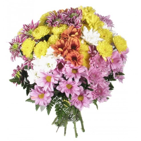 Buchet crizanteme multicolore